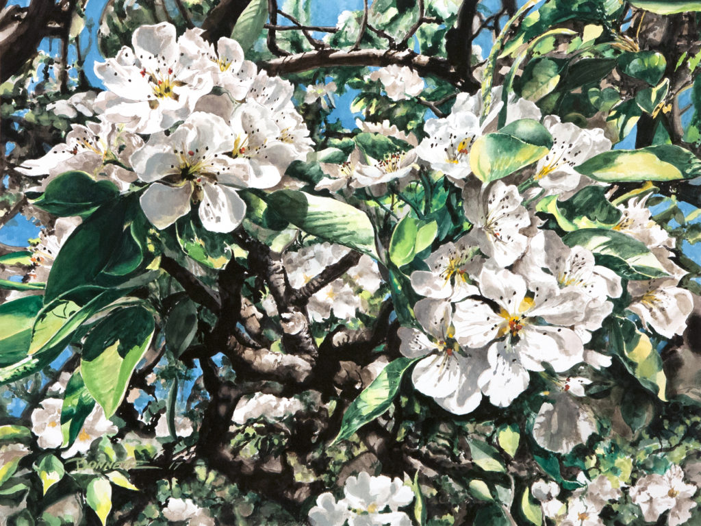 Mark Bonnette - Bartlett Pear Blossoms