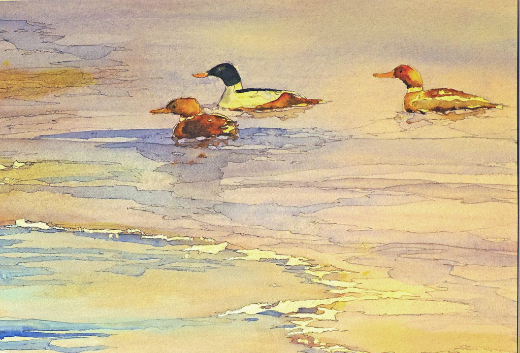James Velthoven - Mergansers