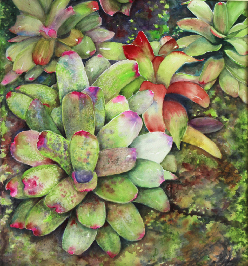 Nancy Murray - Bromeliads