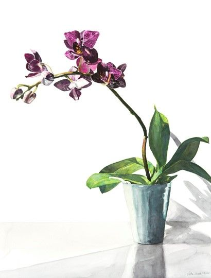 Valerie Mann - Orchid in Window